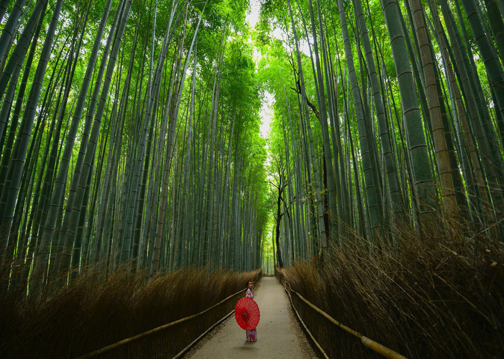 Bamboo Forests in Japan